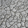 Salinized eroded soil - dry cracked earth — Stock Photo