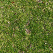 Careless grass texture — Stock Photo