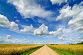 Rural landscape with road in wheat field — Stock Photo