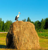 Stork standing on a haystack — Stock Photo