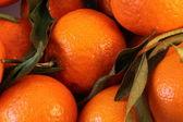 Tangeriny — Zdjęcie stockowe