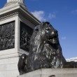 Lion and Nelson`s column — Stock Photo