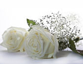 белые розы — Стоковое фото