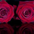 Red roses — Stock Photo #5016160