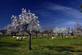 Majorca landscape — Stock Photo