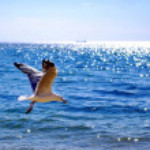 Sea gull — Stock Photo #5017137