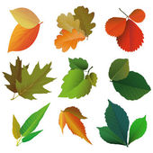 Collection of leaves illustration — Stock Vector