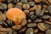 Coffee and nut — Stock Photo