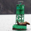 Stock Photo: Harbor seals on green buoy