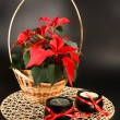 Stock Photo: Red poinsettia