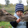 Cute little Boy and deer - Stock Photo