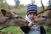 Cute little Boy and deer — Stock Photo