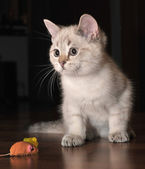 White kitten and a mouse — Stock Photo
