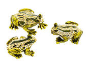 Three frogs talking — Stock Photo