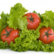 Tomato  salad  lettuce — Stock Photo