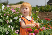 The little girl in a thicket of flowers — Stock Photo