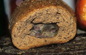 Mice burrow, bread — Stock Photo