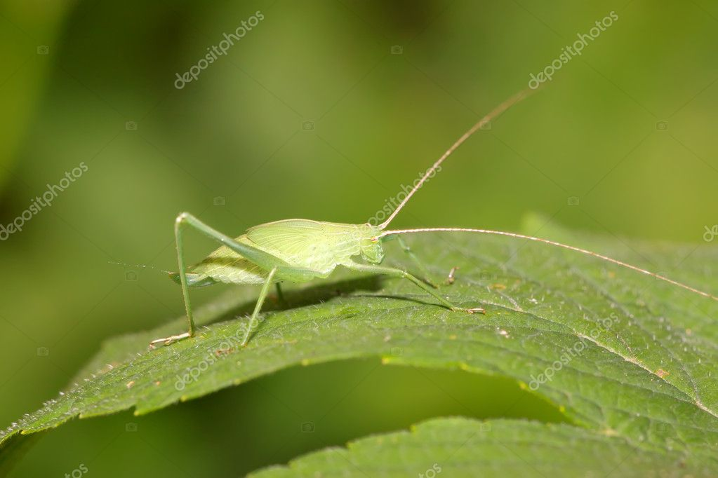 A kind of insects on the green leaf — Stock Photo #5331131