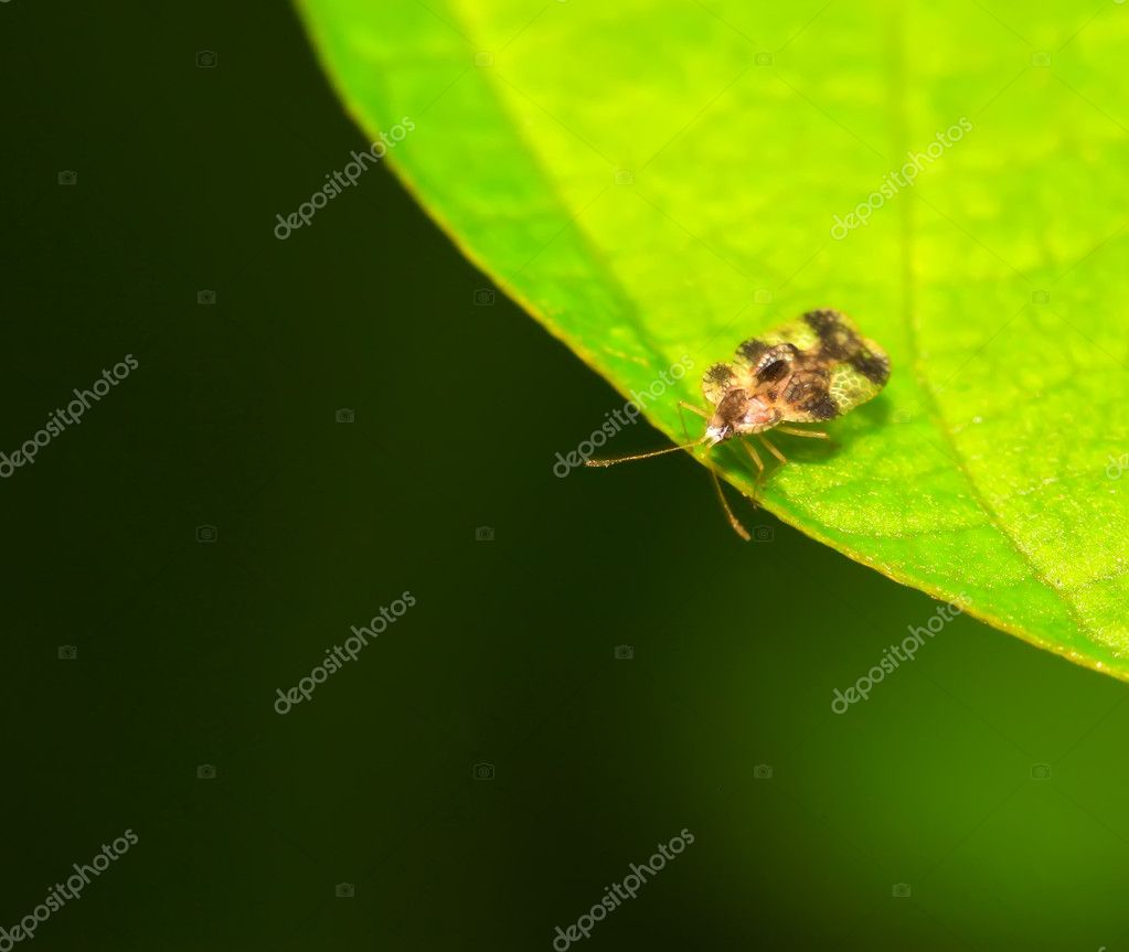 A kind of insects on the green leaf — Stock Photo #5331136