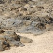 Stock Photo: Accumulation of silt