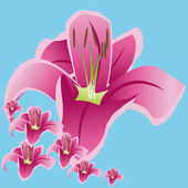 Lily theme — Stock Vector