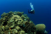 Diver over Inner Pinnacle, Wakatobi, 31/03/2008 — 图库照片