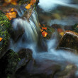 Autumn brook-detail — Stock Photo