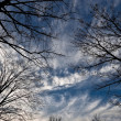 Tree silhuette over cloudy blue sky — Stock Photo