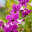 Beautiful colorful orchid - ストック写真
