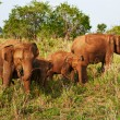Family of elephants — Stock Photo #5099457