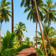 House on the tropical island — Stock Photo