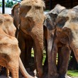 Small group of elephants — Stock Photo #5099715
