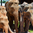 Small group of elephants — Stock Photo
