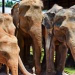 Small group of elephants — Stock Photo