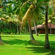 Sunny tropical landscape - Stock Photo