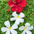 Royalty-Free Stock Photo: White and red flowers