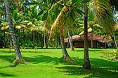 Sunny tropical landscape — Stock Photo