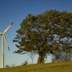 Groß versus Klein, Baum gegen Windmühle — Stock Photo