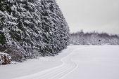 Winterwald mit Loipe — Stock Photo