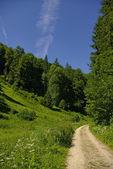 Waldweg, Wanderweg — Stock Photo