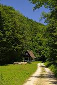 Waldweg, Wanderweg, Jagdhütte — Stock Photo