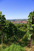 Metzingen - Stadt der Fabrikverkäufe — Zdjęcie stockowe