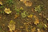 Herbstblätter — Stock fotografie