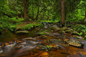 Mountain Stream and Wood Landscape — Stock Photo