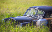 Rusty Car in the Tall Grass — Stock Photo