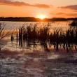 Swamp at sunset — Stock Photo