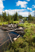Northern Saskatchewan Creek — Stock Photo