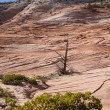 Zion National Park Terrain — Stock Photo