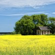 Stock Photo: Little House on Prairies