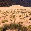 Coral Pink Sand Dunes — Stock Photo #5167331